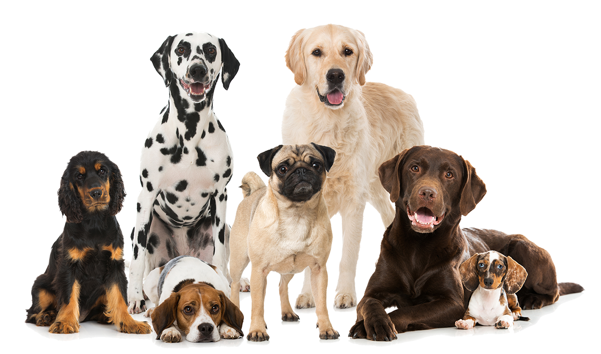 Pet Waste Removal Wilmington NC